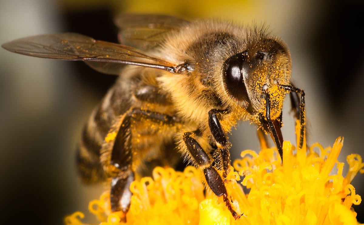 A bee will flap its wings over 270 times