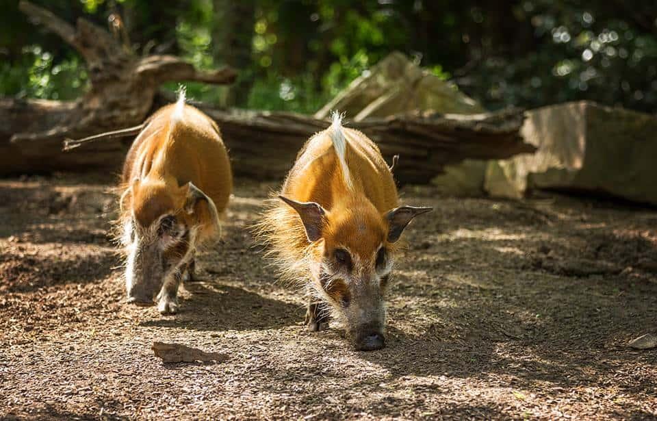 Smithsonian National Zoological Park - Washington, D.C., USA