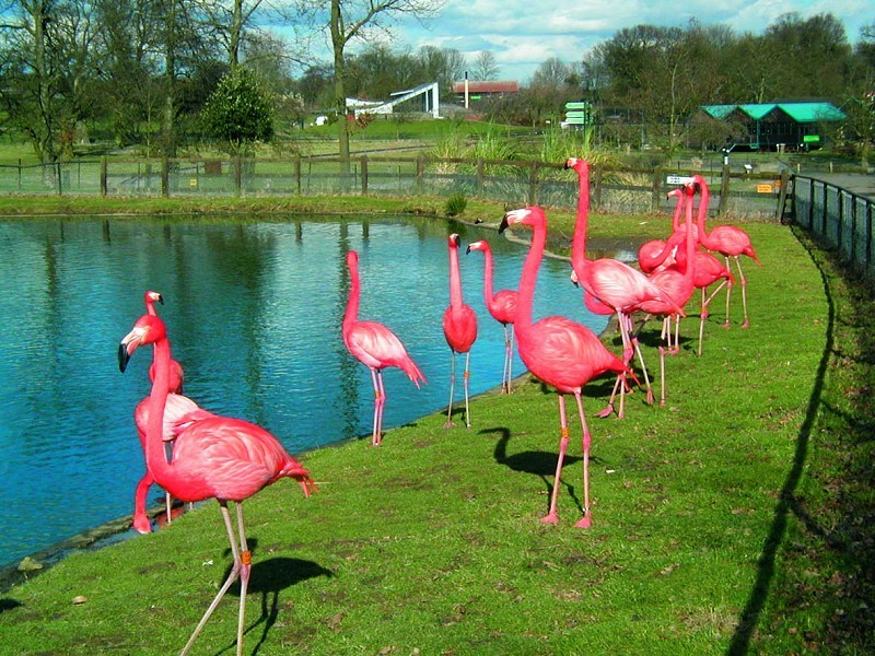 Whipsnade Zoo - Whipsnade, England