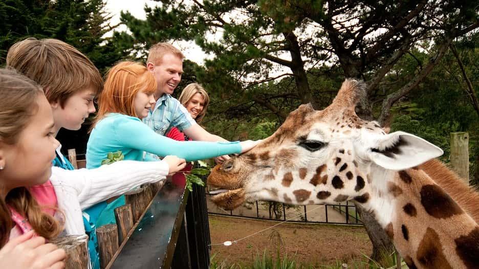 Wellington Zoo - New Zealand
