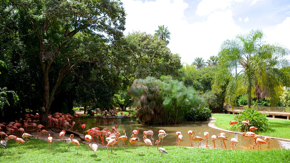 National Zoological Gardens of South Africa - Gauteng, South Africa