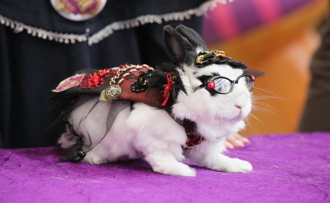 The Too-Cool Bunny
