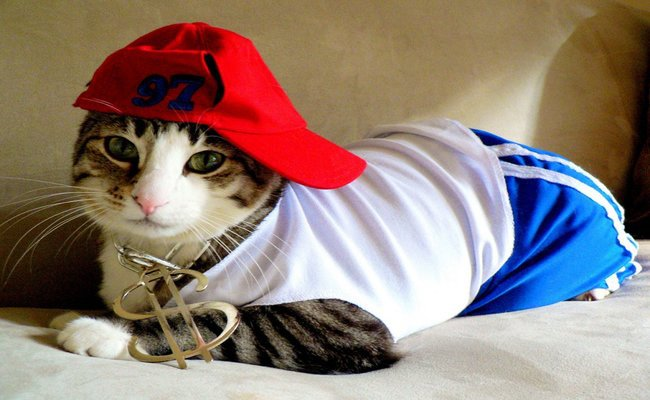 90s Hip Hop Cat
