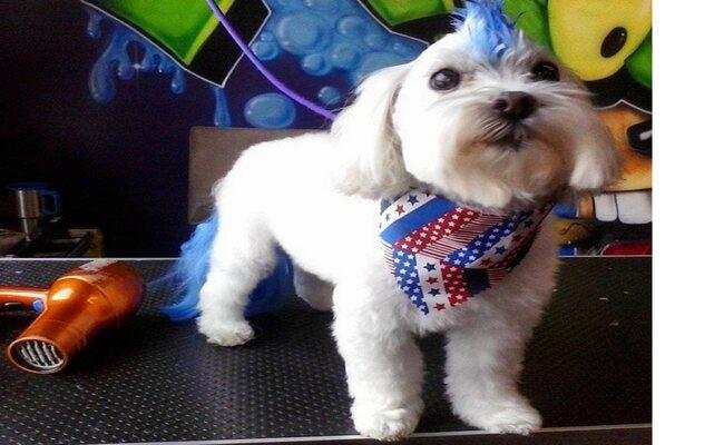 Magical Mohawk Pupper