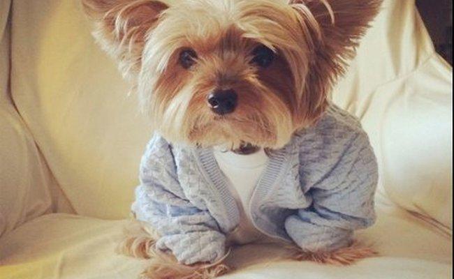 Buddy Holly Pupper