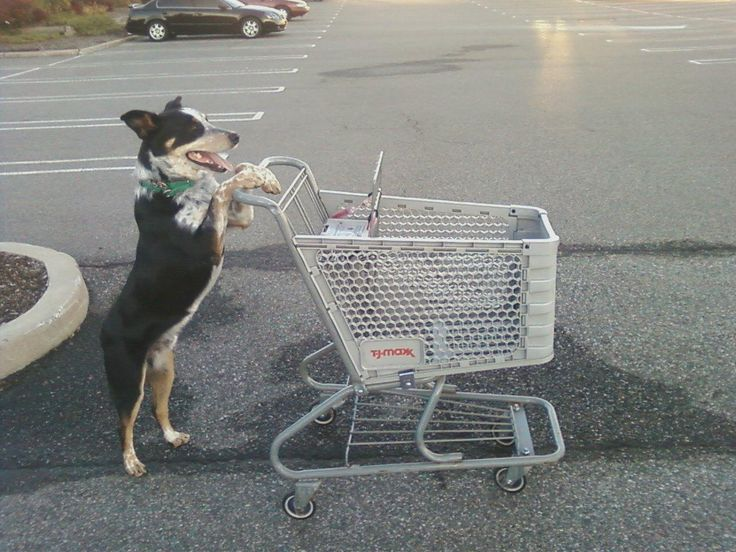 Shopping Cart Licker