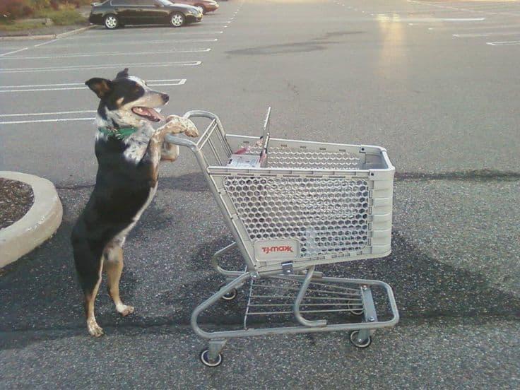 Shopping Cart Licker