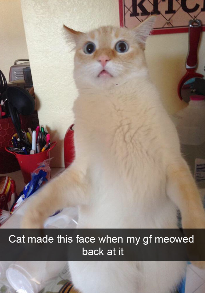 hilarious snapchats anyone who loves cats must see journalistate