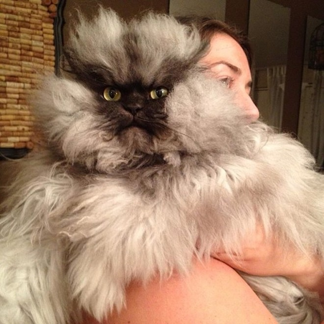 Colonel Meow – Earns $5,000 Annually