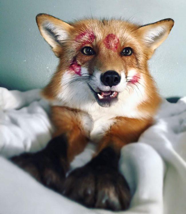 Juniper The Fox – Estimated Earnings Per Post $5,000