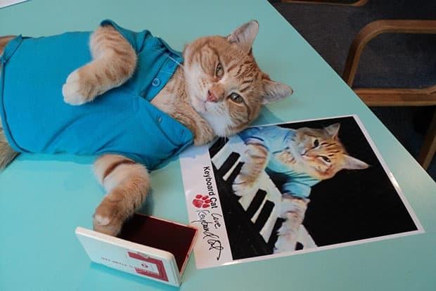 Keyboard Cat – Earned $21,100 $175,800 Annually