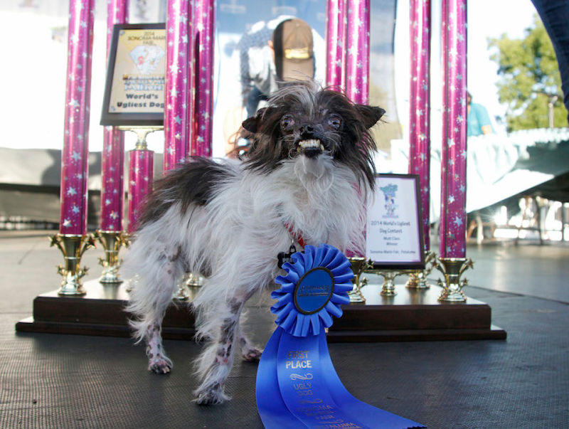 Peanut, The World's Ugliest Dog – Won $1,500