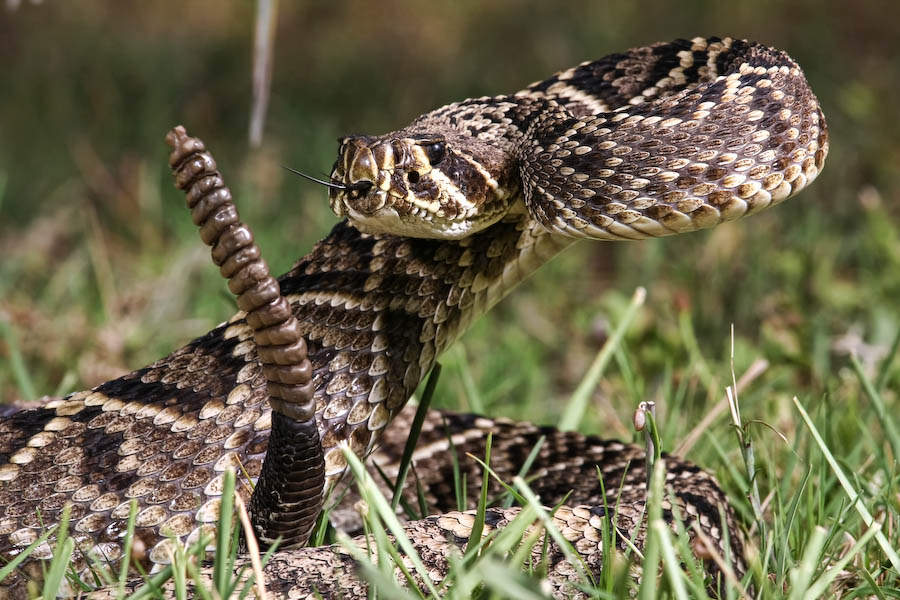 All That Slithers  The Deadliest Snakes On Earth